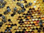 Продукты пчеловодства в медицине